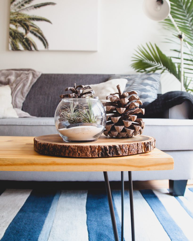 Include Plant Decor as part of your Home Decor.